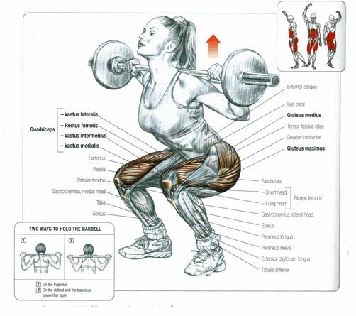 squat-delavier